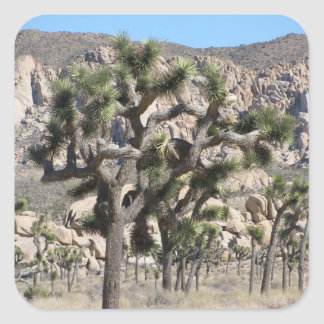 Joshua Tree National Park Square Sticker