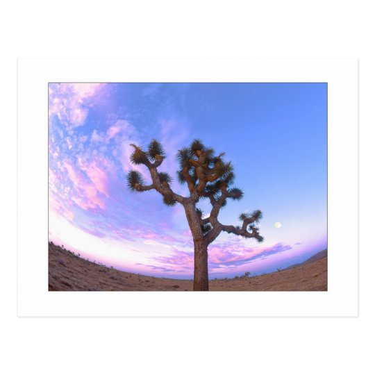 """Joshua Tree Swirl"" Postcard"