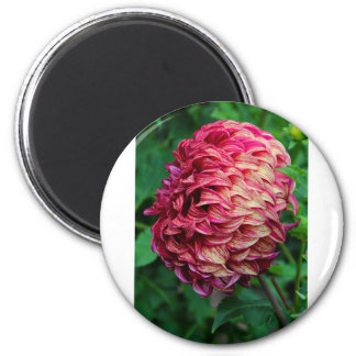 Journey of Discovery 2 Inch Round Magnet