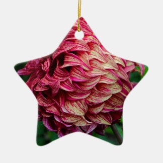 Journey of Discovery Ceramic Star Ornament