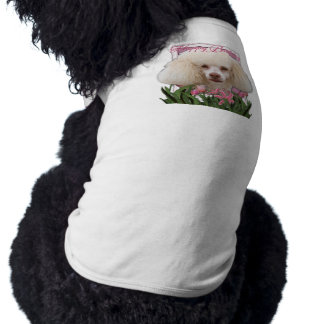 Joyeux anniversaire - caniche manteaux pour chien
