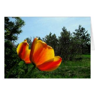 Joyeux anniversaire - tulipes carte de vœux