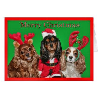 Joyeux Noël avec trois épagneuls du Roi Charles Carte De Vœux