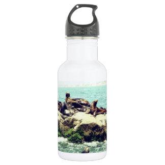 Joyful Seals on a Mexico Beach Jetty 532 Ml Water Bottle