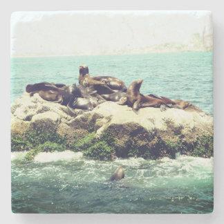 Joyful Seals on a Mexico Beach Jetty Stone Coaster