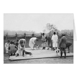 Judging Beagles, 1914 Card