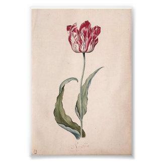 Judith Leyster Tulip Print