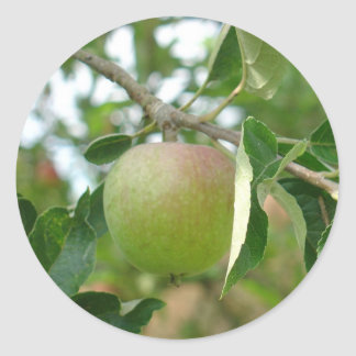 Juicy Green Apple Classic Round Sticker