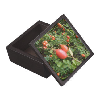 Juicy Red Rose Hips Premium Gift Box