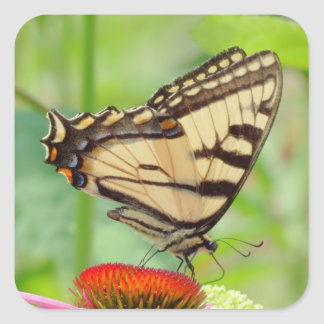 July Swallowtail - Butterfly Square Sticker