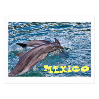 Jumping Dolphins Mexico Postcard