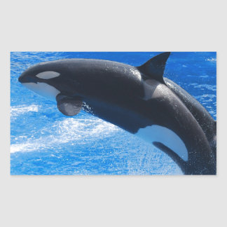 Jumping Orca Whale Sticker