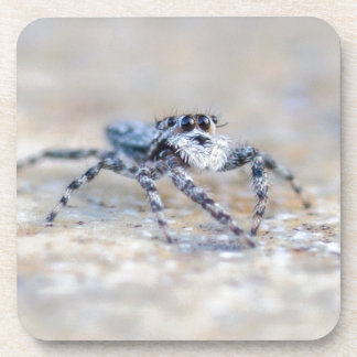 Jumping Spider Drink Coasters