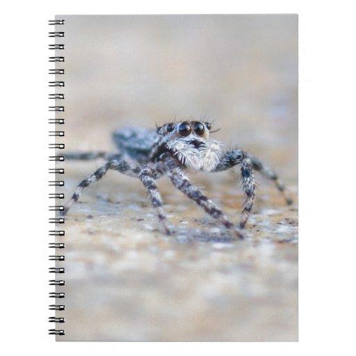 Jumping Spider Journals