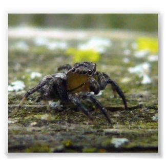 jumping spider photo print