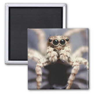 jumping spider square magnet