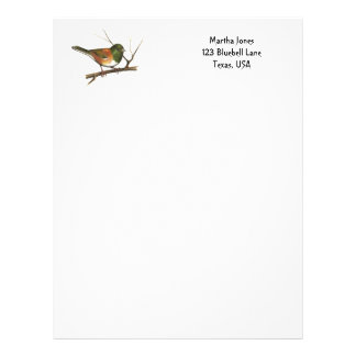 Junco in Color Pencil: Bird: Letterhead