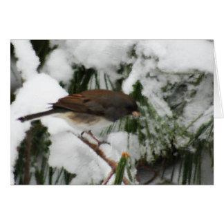 Junco Songbird Painting Card