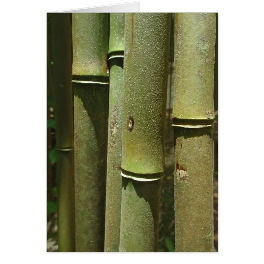 Jungle Bamboo Detail Card