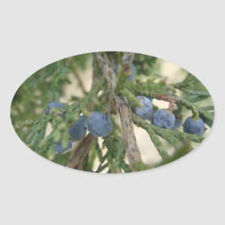 Juniper Berry Stickers