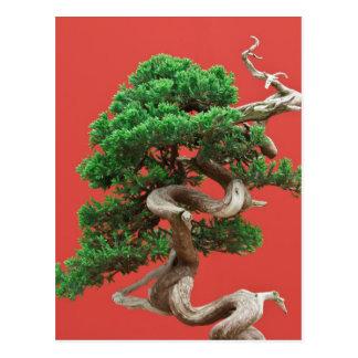 Juniper bonsai postcard