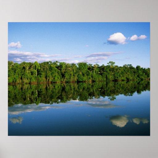 Juruena, Brazil. Forested river bank reflected Poster