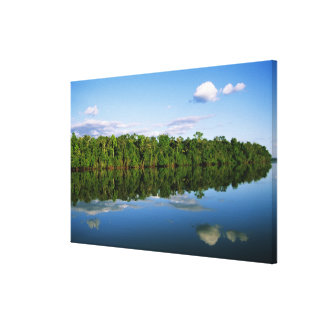 Juruena, Brazil. Forested river bank reflected Stretched Canvas Print
