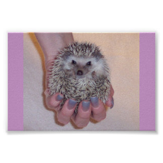 Just a Handful Hedgehog Poster