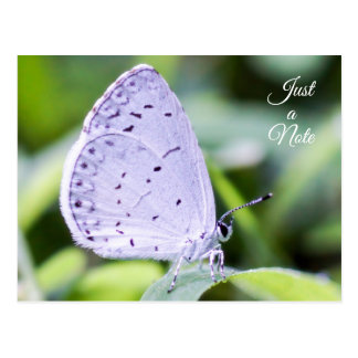 Just a Note Spring Azure Butterfly Postcard