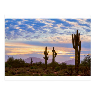Just Another Colorful Sonoran Desert Sunrise Postcard