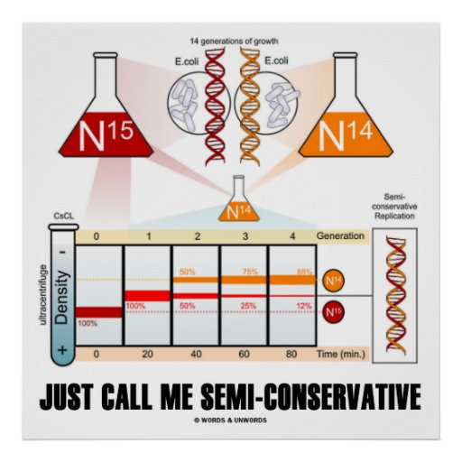 Just Call Me Semi-Conservative (DNA Replication) Poster