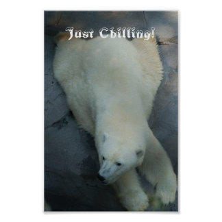 Just Chilling - Polar Bear Poster