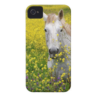 Just Curious iPhone 4 Case