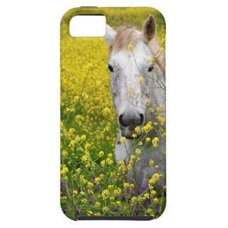Just Curious iPhone 5 Cases