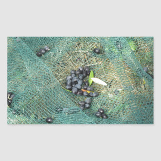 Just picked olives on the net during harvest time