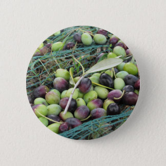 Just picked olives on the net during harvest time 2 inch round button