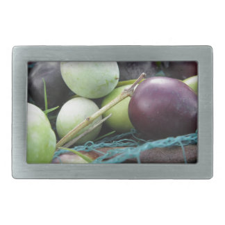 Just picked olives on the net during harvest time belt buckles