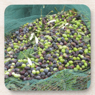 Just picked olives on the net during harvest time beverage coasters