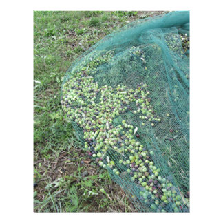 Just picked olives on the net during harvest time custom letterhead