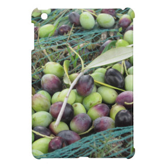 Just picked olives on the net during harvest time iPad mini covers
