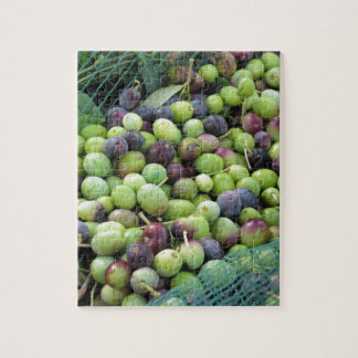 Just picked olives on the net during harvest time jigsaw puzzle