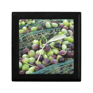 Just picked olives on the net during harvest time keepsake box