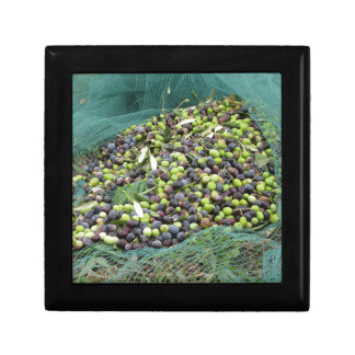 Just picked olives on the net during harvest time keepsake boxes