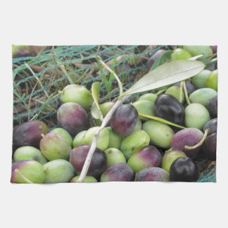 Just picked olives on the net during harvest time kitchen towel