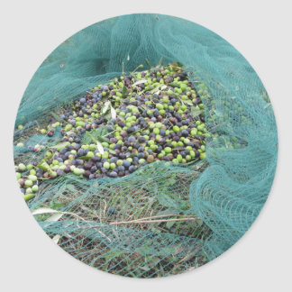 Just picked olives on the net during harvest time round sticker