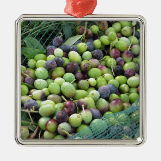 Just picked olives on the net during harvest time Silver-Colored square ornament
