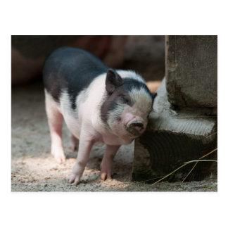 Just The Right Spot Piglet Postcard