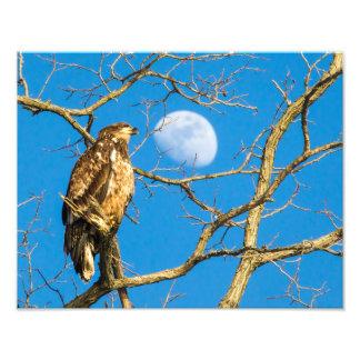 Juvenile Bald Eagle and the Moon Photo Print