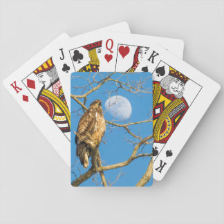 Juvenile Bald Eagle and the Moon Playing Cards