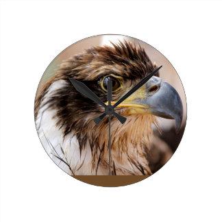 Juvenile Bald Eagle Clock